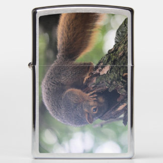 I'm not stuck! I know what I'm doing! Really! Zippo Lighter