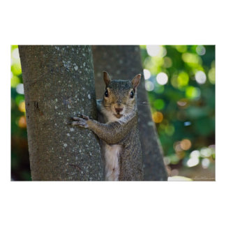 """""""I'm Nuts"""" Young Female Squirrel on Tree Poster"""