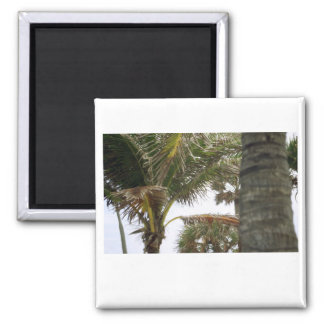 I'm on Island Time! 2 Inch Square Magnet