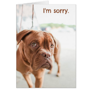 I'm sorry apology card with guilty dog