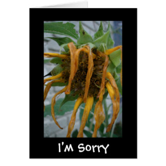 I'm Sorry Notecard
