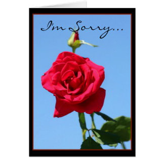 I'm Sorry Red Rose greeting card