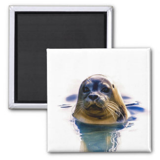 I'M THE REAL SEAL! MAGNET