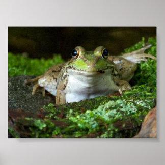 I'm Watching You Bullfrog Poster