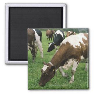ima28991 2 inch square magnet