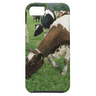 ima28991 iPhone 5 case