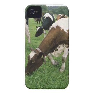 ima28991 Case-Mate iPhone 4 funda