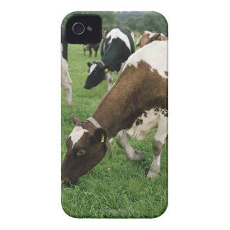ima28991 Case-Mate iPhone 4 fundas