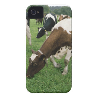 ima28991 iPhone 4 Case-Mate cárcasa
