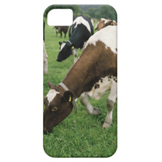 ima28991 iPhone SE/5/5s case