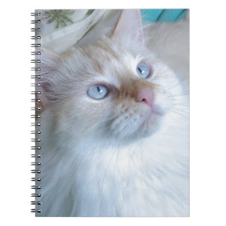 image.jpg notebooks