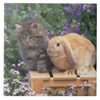 Image of a Kitten and a Lop Ear Rabbit Standing Ceramic Tile