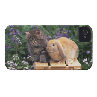 Image of a Kitten and a Lop Ear Rabbit Standing iPhone 4 Case-Mate Case