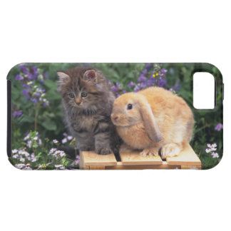 Image of a Kitten and a Lop Ear Rabbit Standing iPhone SE/5/5s Case