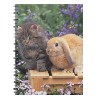 Image of a Kitten and a Lop Ear Rabbit Standing Notebooks