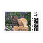 Image of a Kitten and a Lop Ear Rabbit Standing Postage