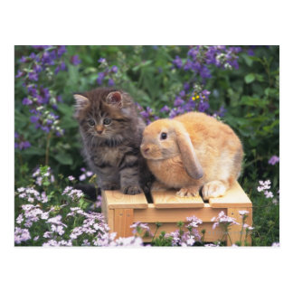 Image of a Kitten and a Lop Ear Rabbit Standing Postcard