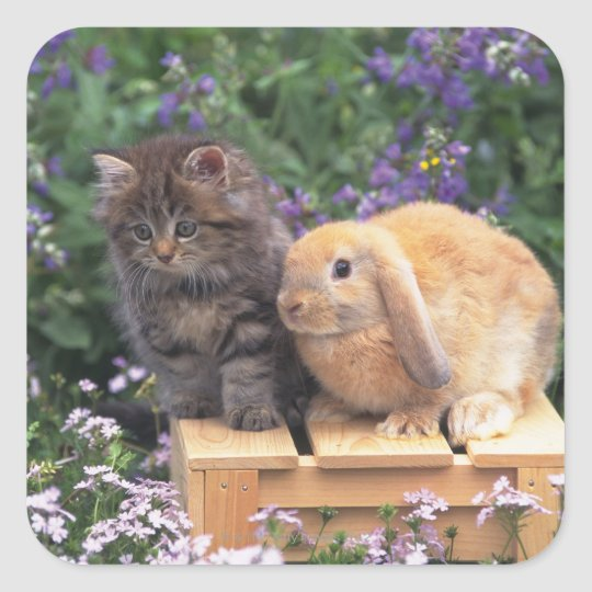 Image of a Kitten and a Lop Ear Rabbit Standing Square Sticker