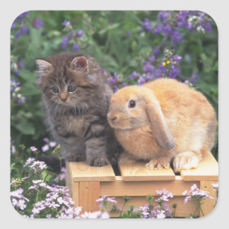Image of a Kitten and a Lop Ear Rabbit Standing Square Stickers