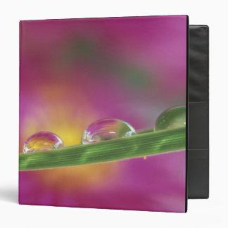 Image of asters formed in water droplets vinyl binders