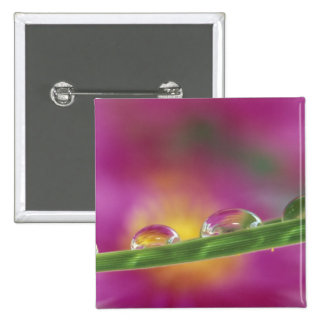 Image of asters formed in water droplets 2 inch square button
