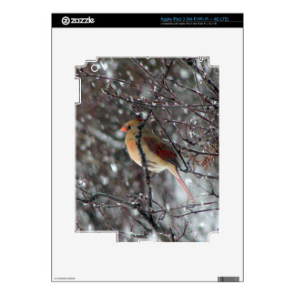 Image of elegant female Cardinal Skins For iPad 3
