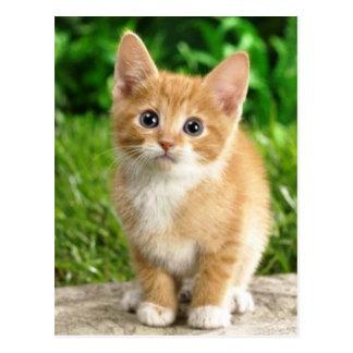 imagem de gatinho postal