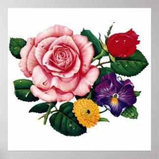imagem de rosas poster