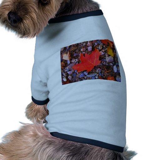 Imagen abril de 2008 012 camiseta con mangas para perro