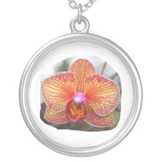 Imagen amarillo-naranja de la flor de la orquídea colgante redondo