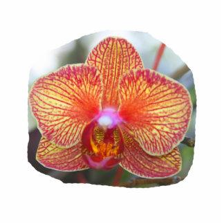 Imagen amarillo-naranja de la flor de la orquídea escultura fotográfica