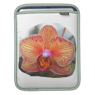 Imagen amarillo-naranja de la flor de la orquídea fundas para iPads