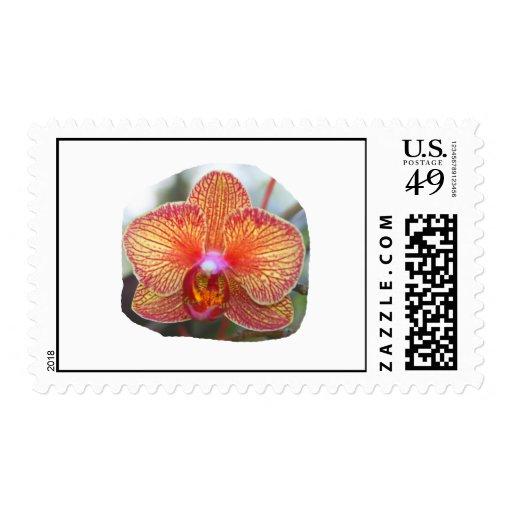 Imagen amarillo-naranja de la flor de la orquídea sellos