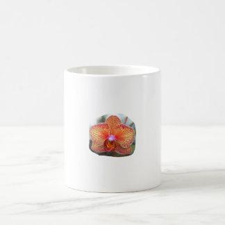 Imagen amarillo-naranja de la flor de la orquídea tazas