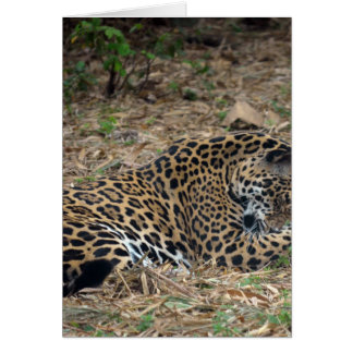 imagen animal de la foto de la pierna de la tarjeta de felicitación