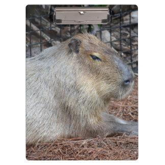imagen animal del critter de la fauna de la vista