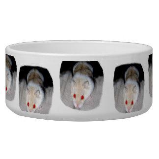 Imagen blanca y rubia del hámster del albino bol para perro