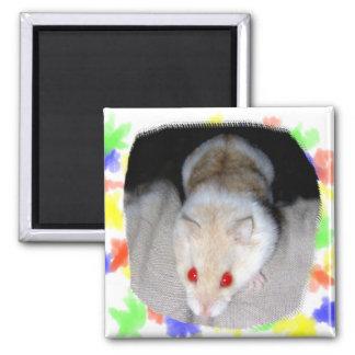 Imagen blanca y rubia del hámster del albino imán cuadrado