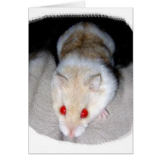 Imagen blanca y rubia del hámster del albino tarjeta pequeña