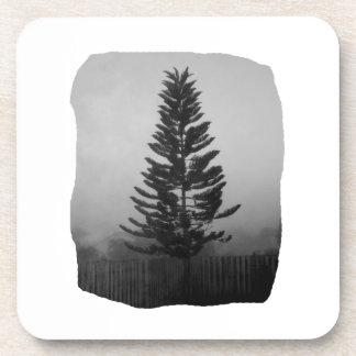 Imagen blanco y negro del pino de Norfolk de niebl Posavasos De Bebida