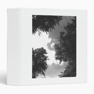 """Imagen blanco y negro granosa de árboles y del carpeta 1 1/2"""""""