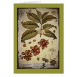 Imagen botánica del café del vintage tarjeta de felicitación