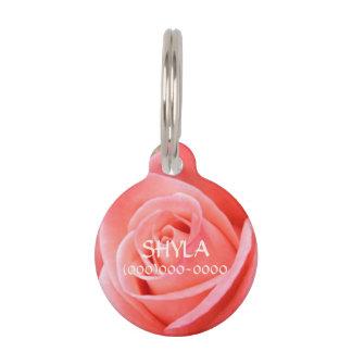 Imagen color de rosa rosada a solas del sostenido identificador para mascotas