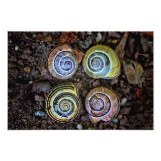 Imagen colorida de las cáscaras del caracol arte fotográfico
