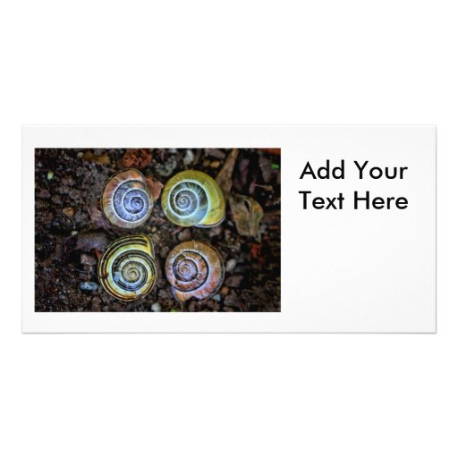 Imagen colorida de las cáscaras del caracol tarjeta fotográfica