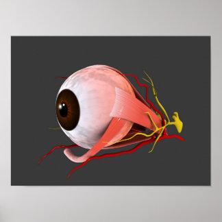 Imagen conceptual de la anatomía 5 del ojo humano poster