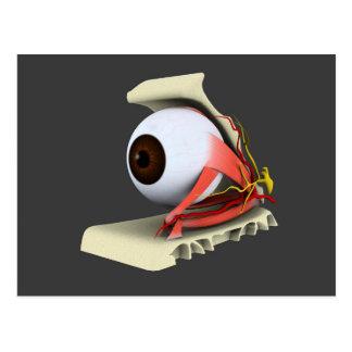 Imagen conceptual de la anatomía 6 del ojo humano tarjeta postal