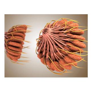 Imagen conceptual de la anatomía femenina 8 del postal