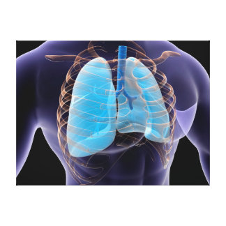Imagen conceptual de los pulmones y de la caja lienzo envuelto para galerías