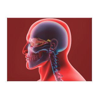 Imagen conceptual del ojo humano y del cráneo impresiones de lienzo